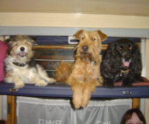 Плата за перевозку домашних животных грузобагажом