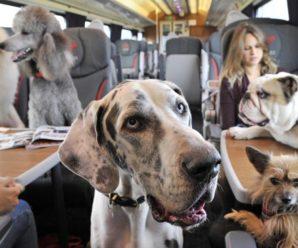 Список животных, разрешенных к перевозке в РЖД, будет расширен.