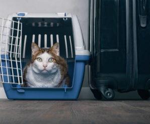 Правила перевозок животных в поезде РЖД в 2019 году.