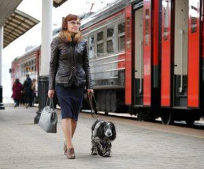Перечень городов (пунктов продажи) по оформлению перевозок домашних животных в РЖД