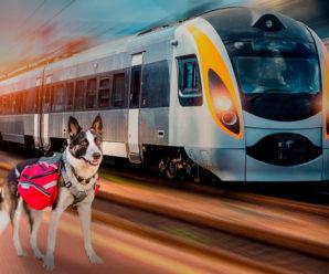 Перечень поездов по перевозке домашних животных РЖД